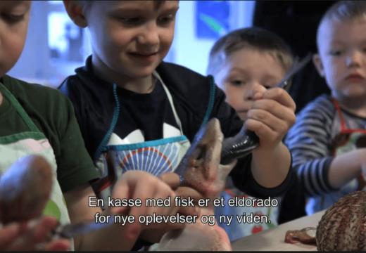 Børnehavebørn holder døde fisk som del af aktivitet